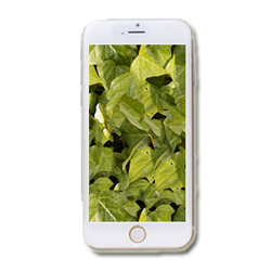 iPhone 6 Plus Reparatur